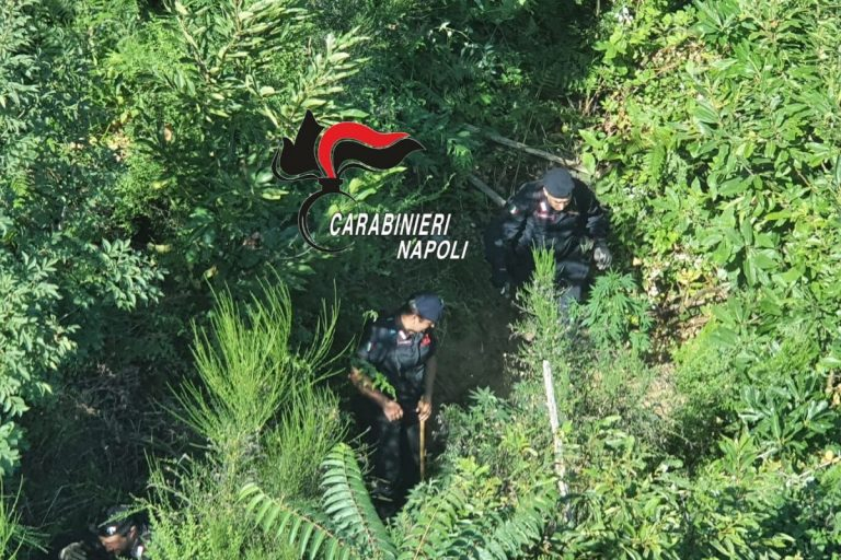 piantagioni marijuana carabinieri napoli