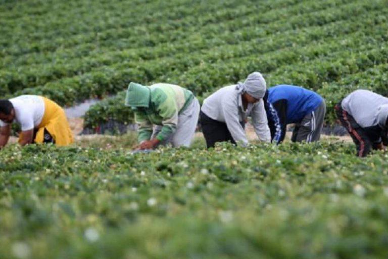 Regolarizzazione migranti domande