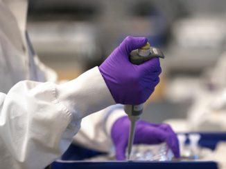 """Vaccino Coronavirus, Moderna: """"Funziona sulle scimmie"""""""