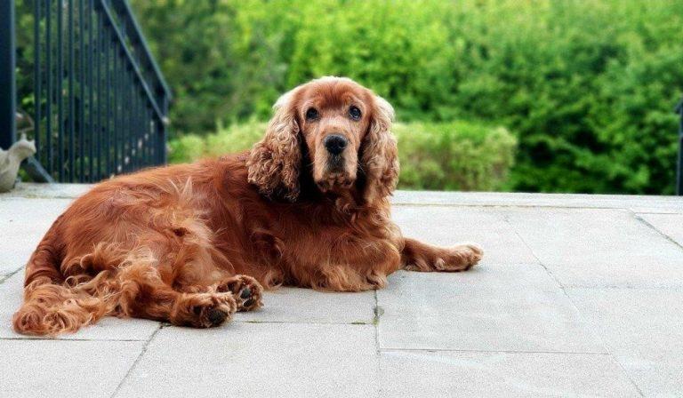 abbandonato cane sul balcone