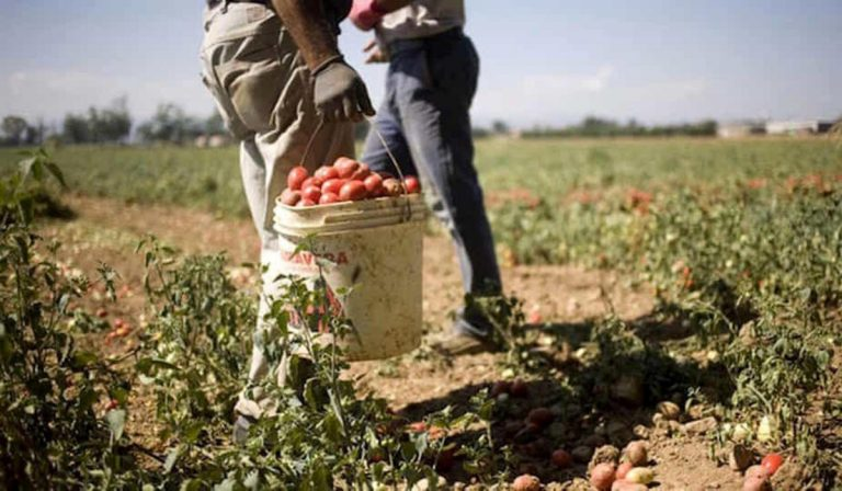 Covid, salgono i lavoratori positivi nell'azienda agricola di Mantova