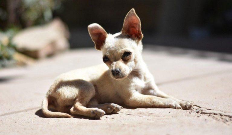 cane abbandonato a Caltanissetta
