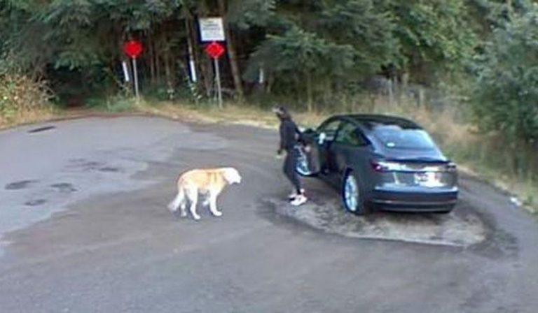 cane abbandonato nel parcheggio