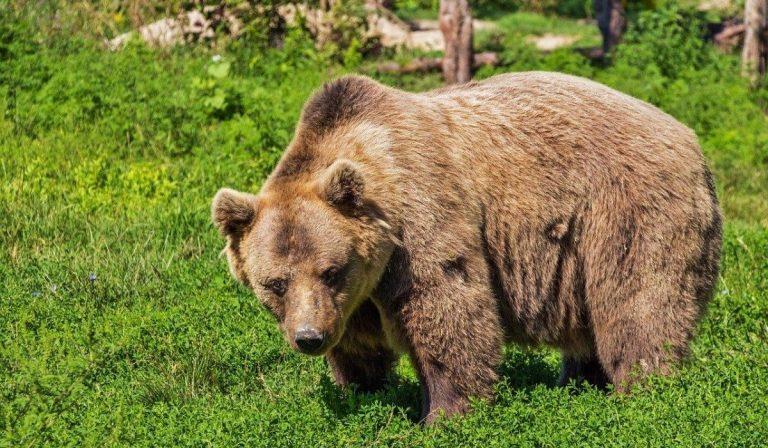 orso aggredisce carabiniere