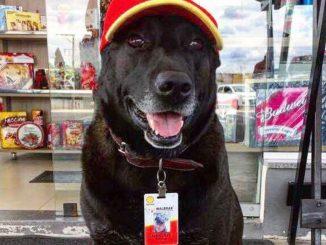 Il padrone è morto da 10 anni, il cane lo aspetta ancora in ospedale