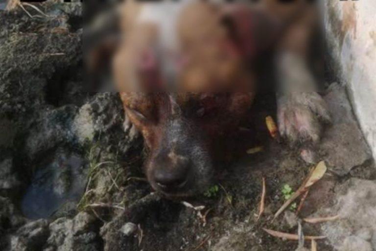 Uccidono un cane danno fuoco