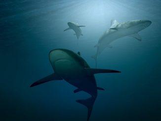 Vaccino anti-covid squali