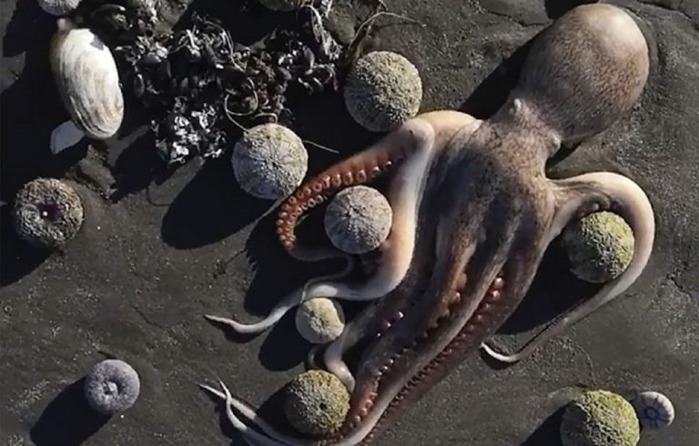 Catastrofe ecologica in Russia, morti migliaia di animali