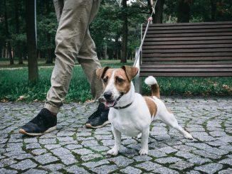 Uscite con il cane