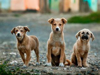 truffa cucciolo cane africa