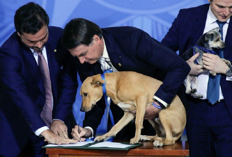 Brasile, se a firmare una legge è un cane