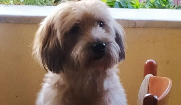 Operazione cane finanziata Fedez