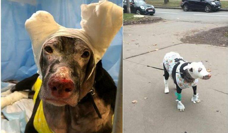 cane eroe salva 4 anziani da un incendio