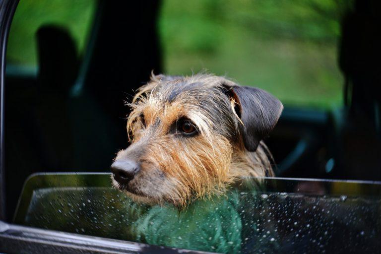 catania cane auto