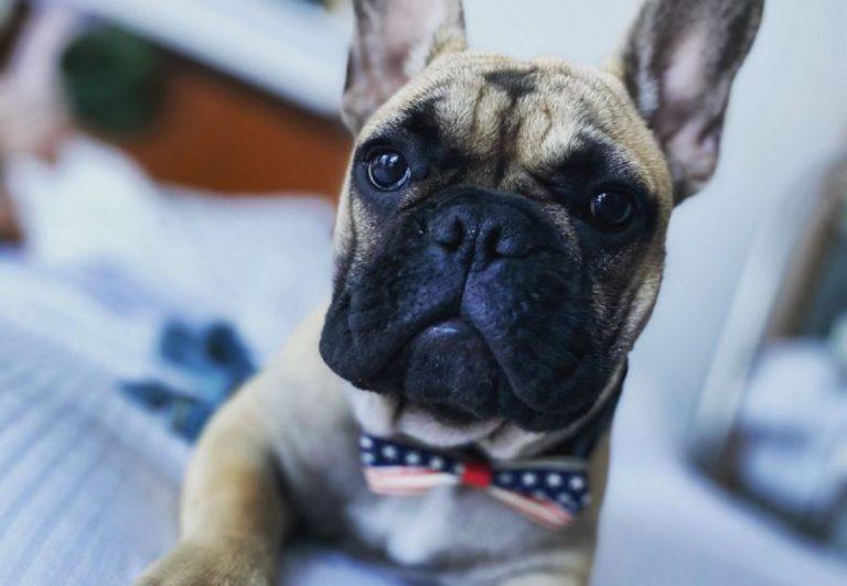 elezioni usa 2020, un cane è stato eletto sindaco