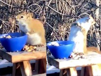 scoiattolo-ubriaco