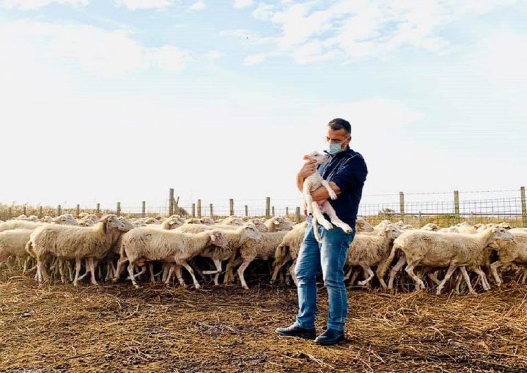 sindaco bada al gregge perchè il pastore positivo al covid