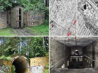 Templewo, in Polonia e la colonia di formiche nel bunker
