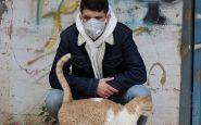 covid anticorpi cani gatti