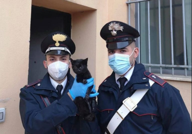 Gatto salvato dai carabinieri
