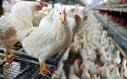 Uomo infettato dall'influenza aviaria in Cina, ricoverato in terapia intensiva