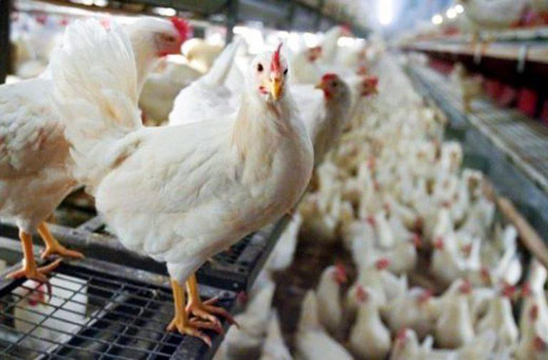 influenza aviaria cina 768x505
