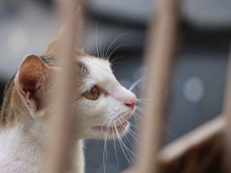 gatti allevamento di pelliccia
