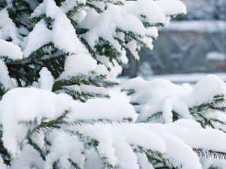 Fine dicembre: gelo e neve