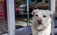 Ricoverano il padrone e il cane lo aspetta all'uscita dell'ospedale
