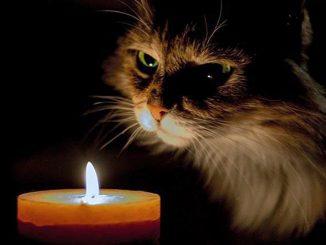 Covid, 15 positivi in Cile dopo aver partecipato al compleanno del gatto
