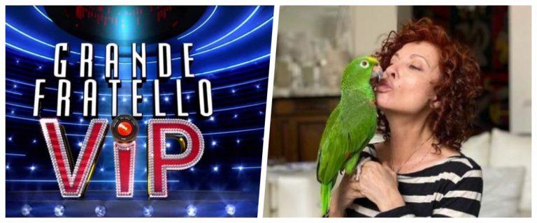 gf vip pappagallo