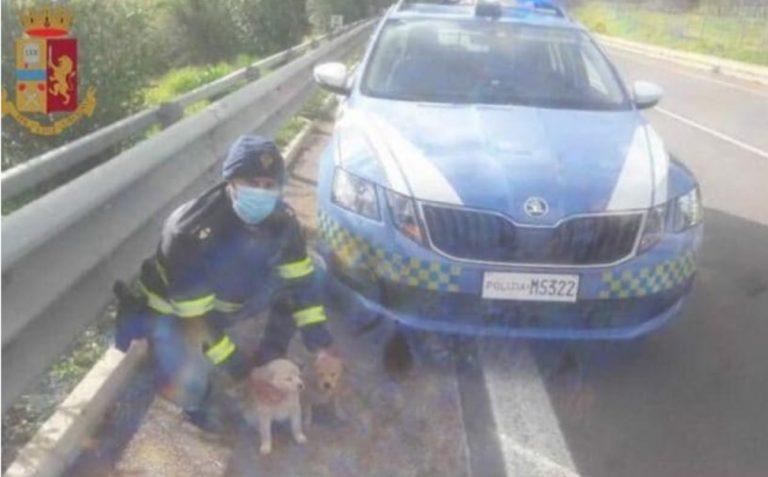Cani abbandonati a Jerzu e salvati dalla polizia