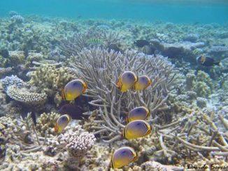 Restauro scogliere coralline, accordo Milano-Bicocca e governo Maldive