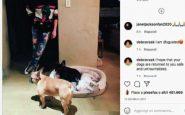 Rapiti a Los Angeles 2 bulldog di Lady Gaga, ferito il dog sitter
