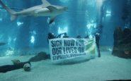 """""""Ci salvi chi può"""", l'Acquario di Genova contro il global warming"""