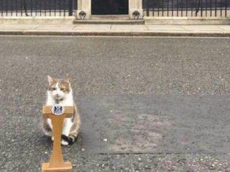 londra gatto larry