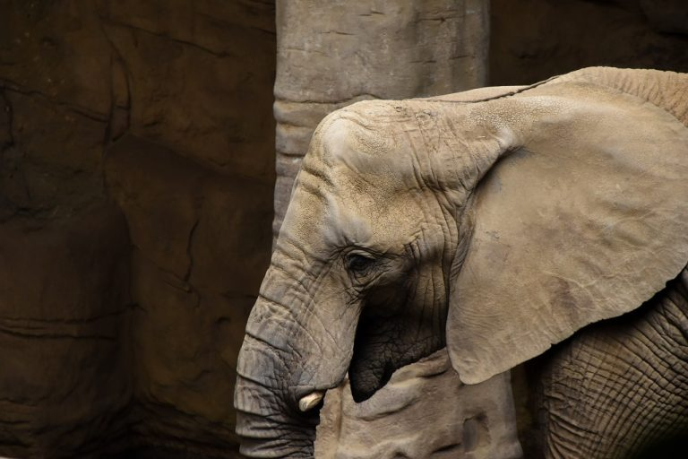 Elefante in un zoo