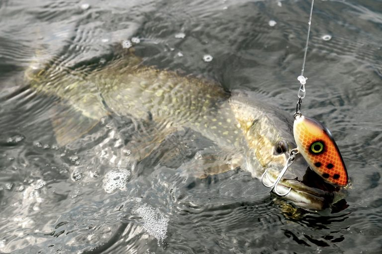 piscor pesca spinning
