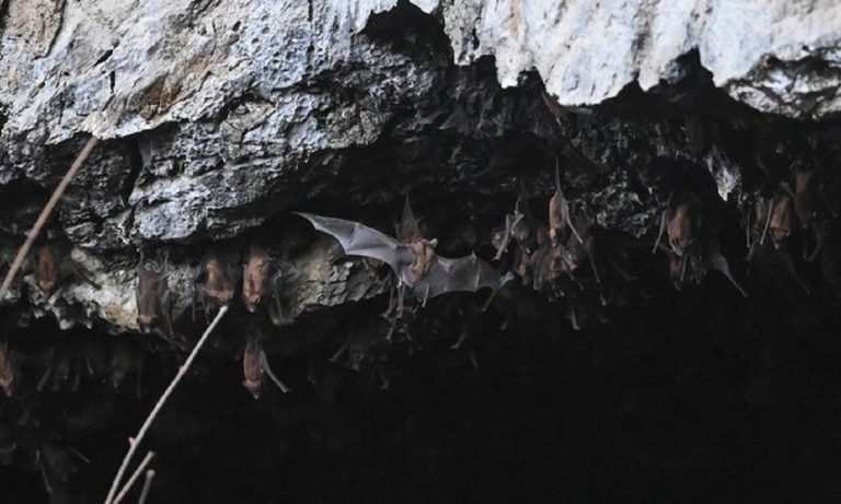 covid simile cina pipistrelli