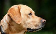 Cani avvelenati dal collare