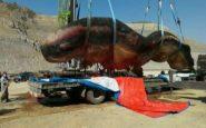 Un capodoglio di 18 metri trovato morto nel Nordest della Cina