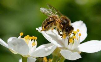 Lidl lavora al primo standard sulla biodiversità in agricoltura