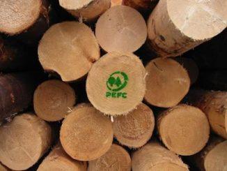Recovery fund, i vantaggi di investire nel patrimonio forestale