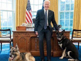 Joe Biden e i suoi cani