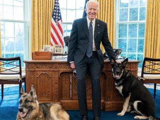 Joe Biden e i suoi due cani