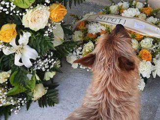 muore-padrone-cane-va-a-trovarlo