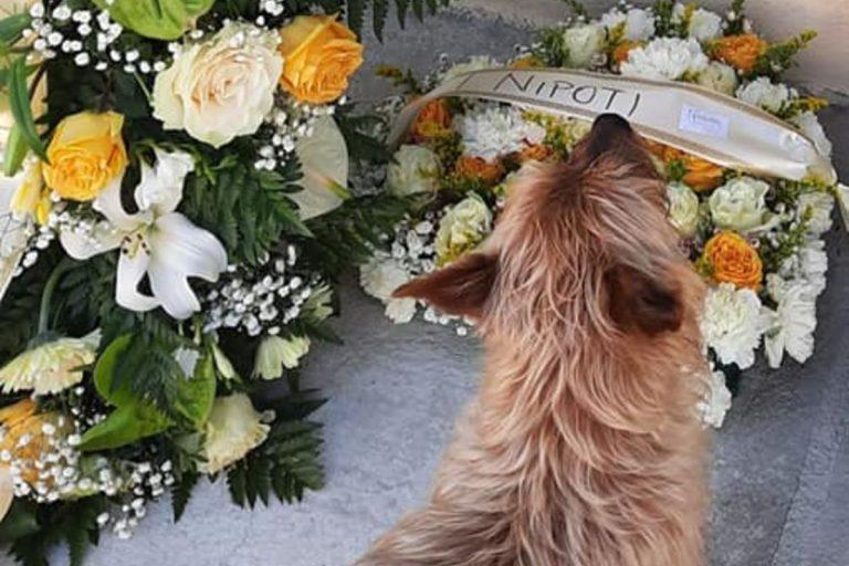 Muore il padrone, ma il suo cane va a trovarlo tutti i giorni