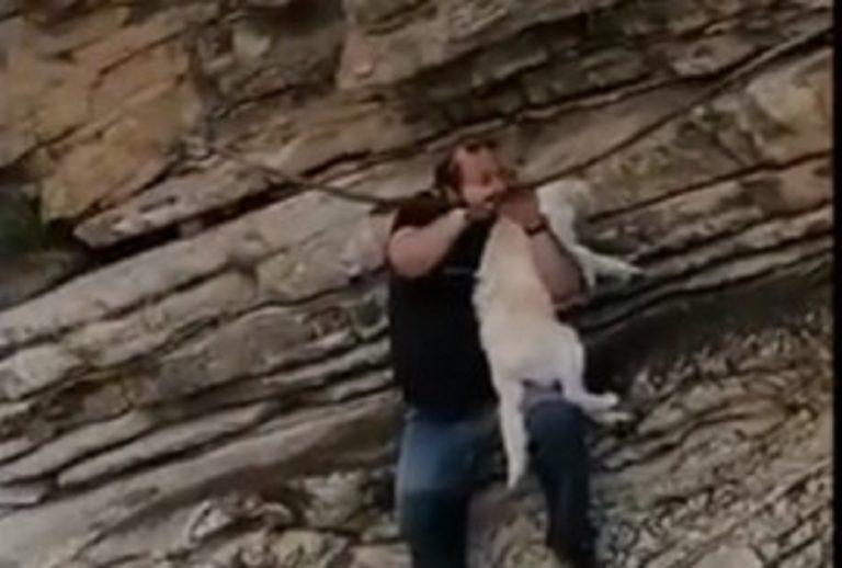 Salva un cane e lo adotta, chef animalista rischia la vita