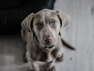 spara al cane per non pagare il veterinario