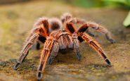 Morsi di ragno ed eiaculazione precoce: colpa di Astra Zeneca